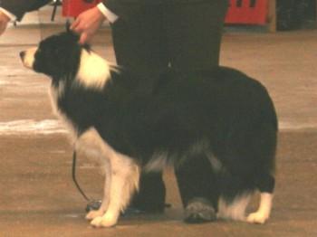 Luton Premier Dog Show